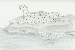 Resting Harbor Seals by magrunemoon