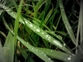 :Waterdrops on Gras: by Pillowbox