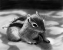 Baby Squirrel by KayZeSpy