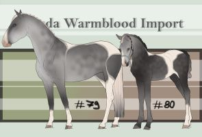 Nevada Warmblood 79-80 by BRls-love-is-MY-Live