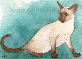 Siamese Cat ACEO by haz-elf
