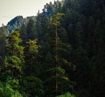 Eagle Creek Forest by KRHPhotography