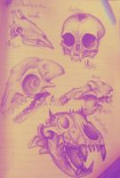 more pen skulls by DollCreep