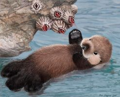 baby sea  otter and barnacles, Intertidal High-5 by Psithyrus