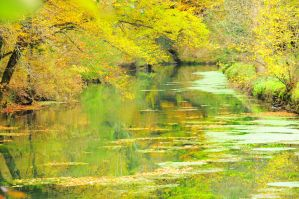 Green river by scubapic