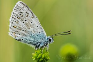 Butterfly (Any Idea which one exactly?) by BrianBarnhart