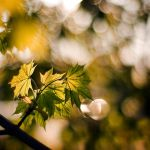 .leaf2. by zeenon