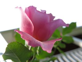 Underneath A Beauty Pink by MegnRox15