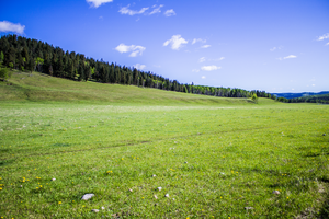 Large Green Meadow by oddmountain