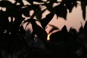 The setting sun... by sparsh436