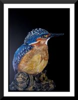 Kingfisher by graphiteimage