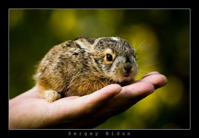 Baby Rabbit... by sergey1984