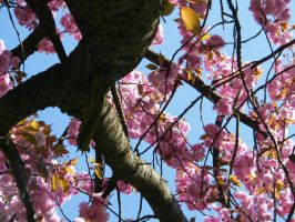 24. April in Hanau 04 by Mietschie