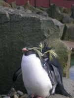 penguin 2 by athenathegreat7