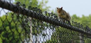 Running Along the Fence by Souzay