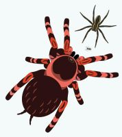 Day 50: Spiders by ysyra