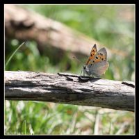 Butterfly 4 by Globaludodesign