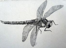 Dragonfly study by 00BlacKBerrY00