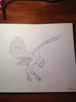 My first sketch of a Barn Owl by Silvercatgirl27