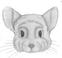 Chinchilla Pic B by inulover411