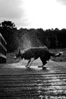 Splash B-W by Thomas-Mifune