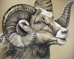 Eaross Big Horn Ram by HouseofChabrier