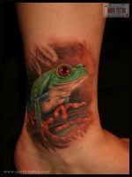 tree frog by anabi