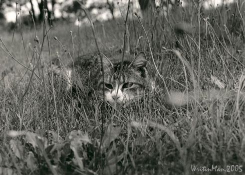Tiger in the Grass by WritinMan