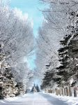hoar frost path by Handie
