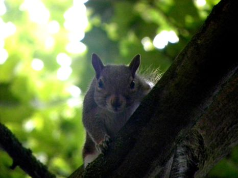 Squirrels in Woodland by Sara-Snaps