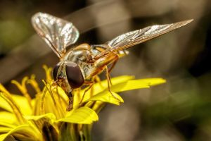 Hoverflies in December Series 1-3 by dalantech