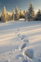 Winter footsteps... by yonashek