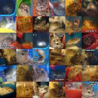 Hamster montage by hedspace77