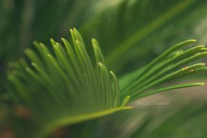Palm by silber-englein