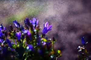 April Shower by Justine1985