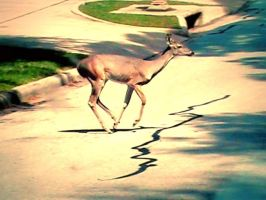 Deer in the neighborhood by bythebutterfly
