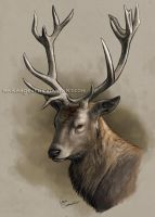 Male Red deer EDIT by makangeni