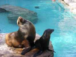 Sea Lions by Maran-Zelde