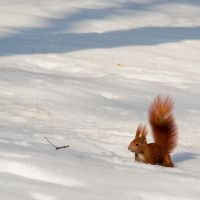 Winter squirrel by photo-exile