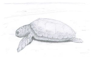 turtle by Sarippus