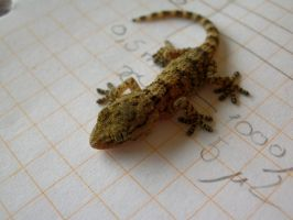 Gecko II by LetoCrows