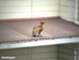 Stray Cat on the Roof by larksgar