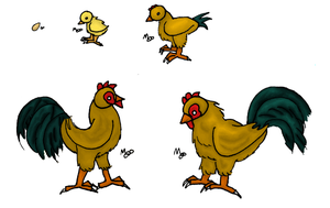 Chicken Lifecycle by Ramvling