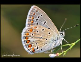 butterfly by liviugherman