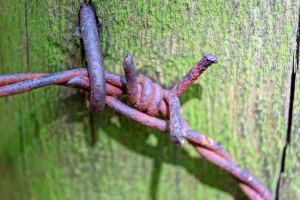 barbed wire by Mittelfranke