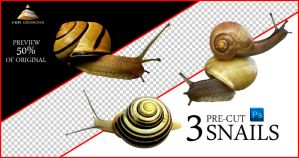 3 Snails Clean Cutouts by HJR-Designs