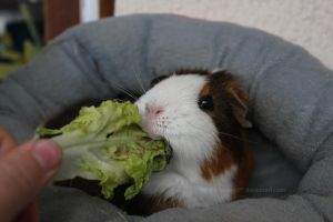 Fritzi with her salad... by Calitha-Lena
