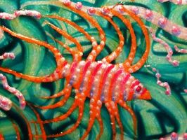 Lion Fish with Eels - 9053-1 by Hoon-King