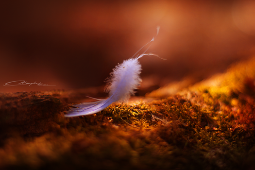 Feather Animal by MaaykeKlaver