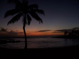palm tree sunset in kaua'i by spaztastyk